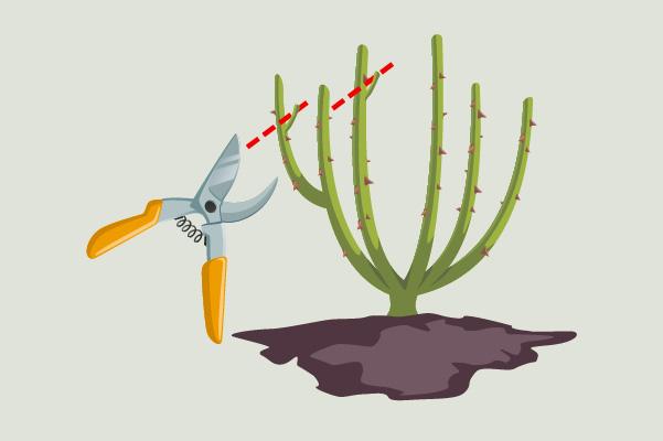 taglia a destra per dirigere la pianta verso destra