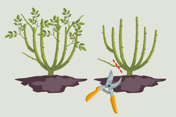 pota le piante deboli