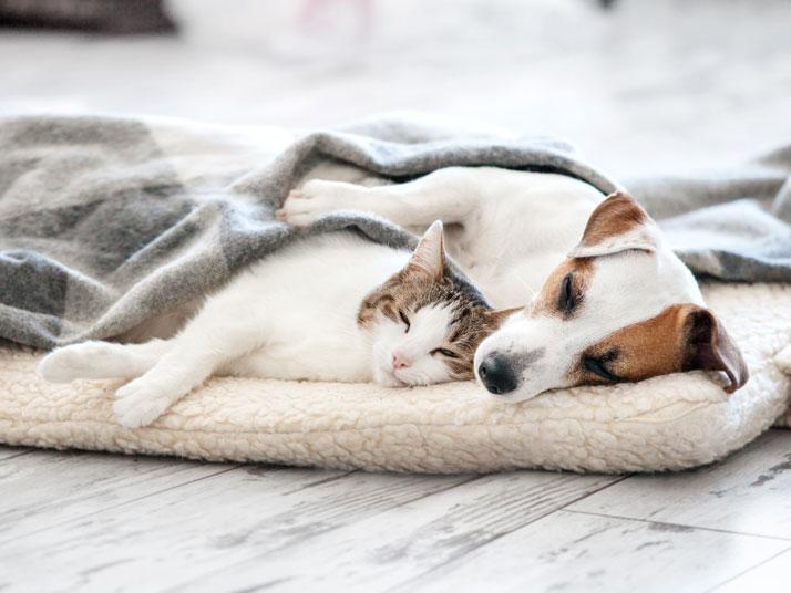 Come Creare Una Cuccia Per Cane E Gatto Con Materiali Di Riciclo
